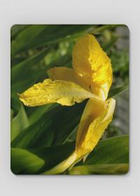 Podkładka Kwiaty Monachium 3