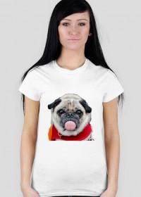 dog mops girl