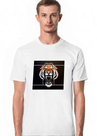 Lazura Lion