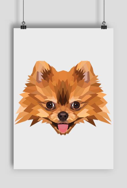 Szpic miniaturowy pomeranian plakat a2 z Twoim Zwierzakiem