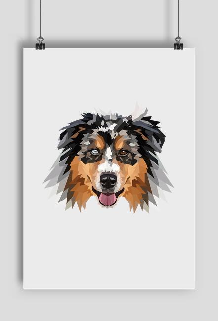 Australian Shepherd Plakat a2 z twoim psem