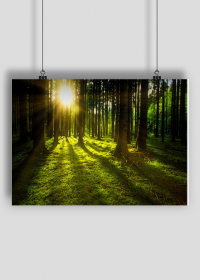 relaksujący plakat green forest