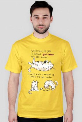 Koty z kotami