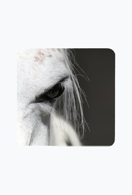 magnes oko konia