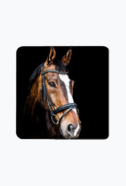 magnes głowa konia