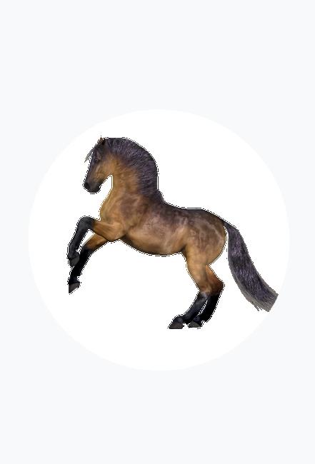 magnes z koniem