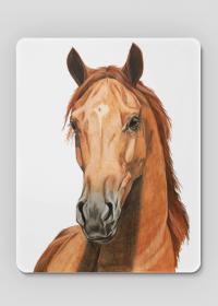Portret koń kasztan