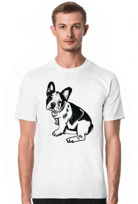 koszulka bulldog francuski